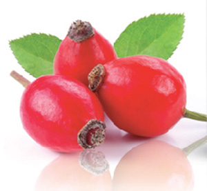 about KOSMEA's Rose hip